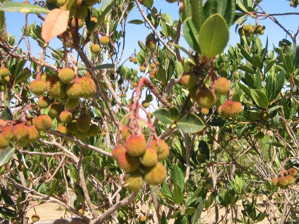Elenco di alcune variet di alberi da frutto siciliani for Elenco alberi da frutto