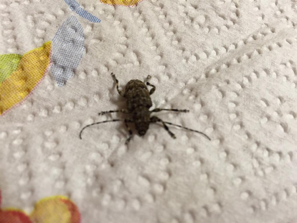 Invasione di grilli a San Severo e di scarafaggi: al via la disinfestazione.